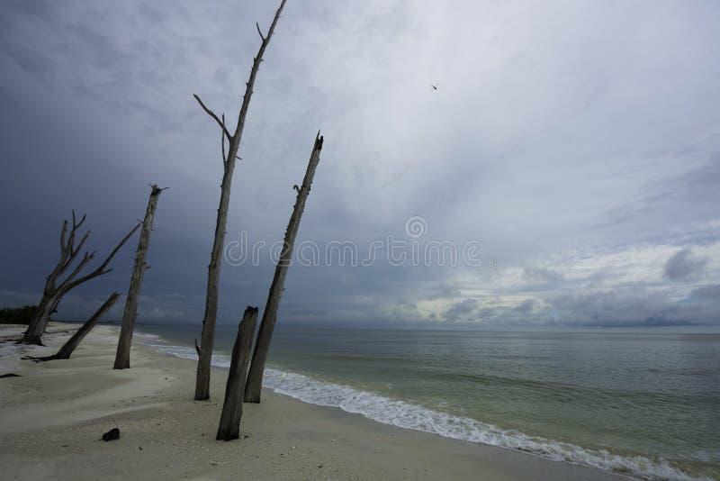 Minnaarssleutel in Bonita Springs, Florida stock fotografie