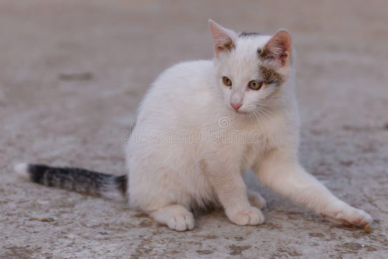 Minou blanc se reposant sur le béton regardant loin photo stock