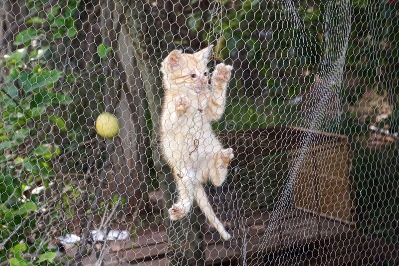 Minou nouveau-né de chat s'élevant sur le filet métallique photographie stock libre de droits