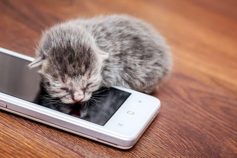 Minou nouveau-né près de téléphone portable Gift_ d'anniversaire photos libres de droits