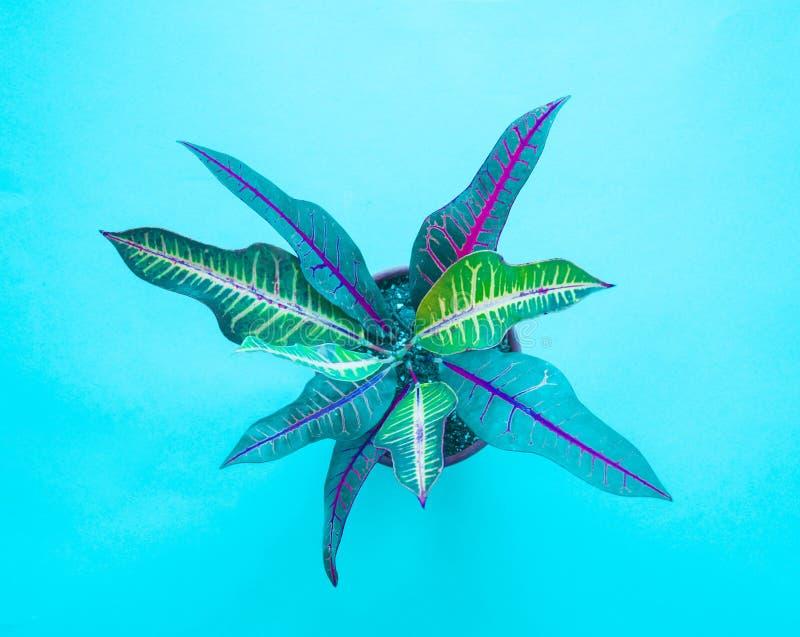 Minsta konstdesign för tropiska gräsplaner Samtida konst Kaktusmodeuppsättning royaltyfria foton