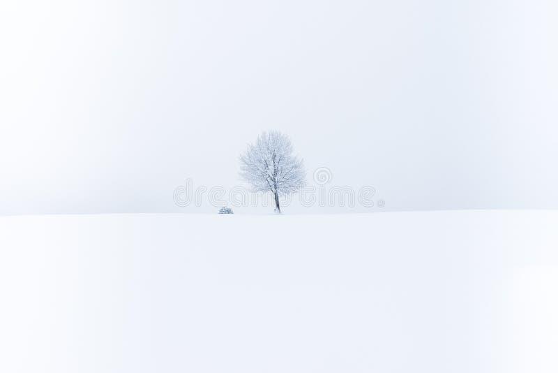 Minsta sammansättning av ett träd i snön royaltyfria bilder