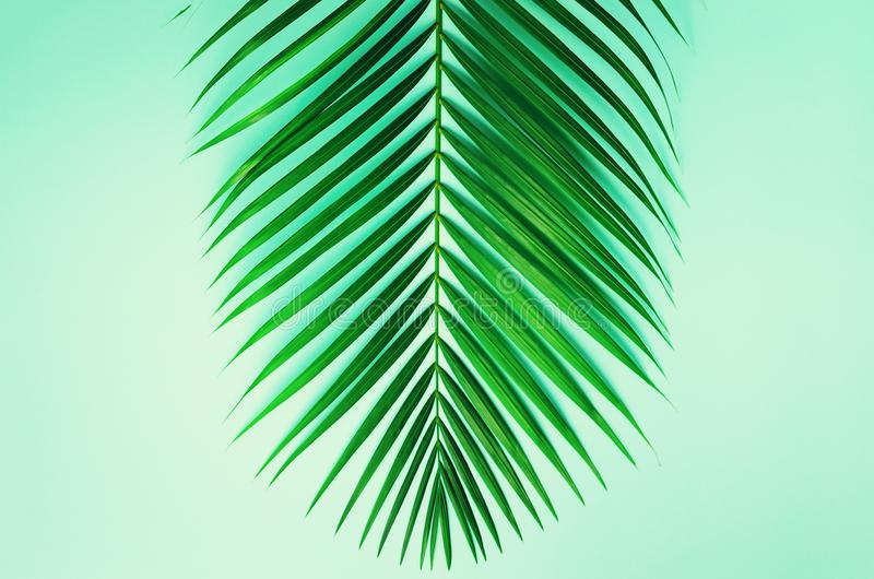 Minsta sommarbegrepp Gräsplanblad för bästa sikt på punchy pastellpapper Den idérika lägenheten lägger med kopieringsutrymme gömm arkivbild