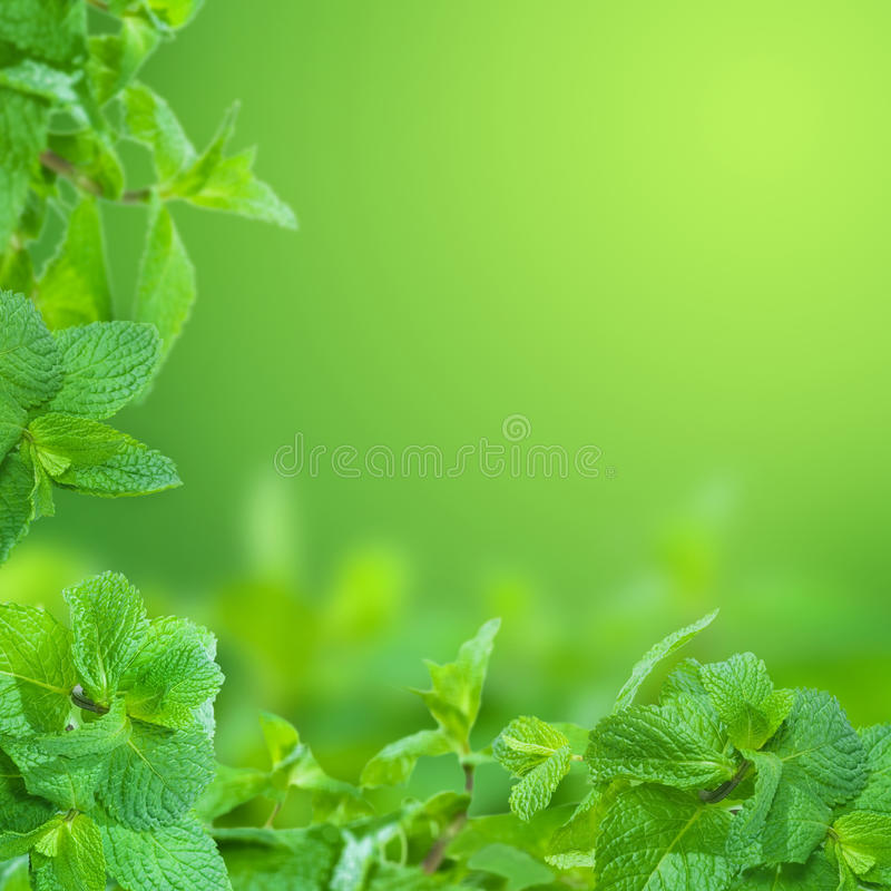 Free Mint Royalty Free Stock Image - 11636206