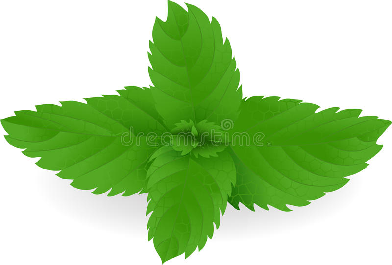 Download Mint Stock Image - Image: 13045781