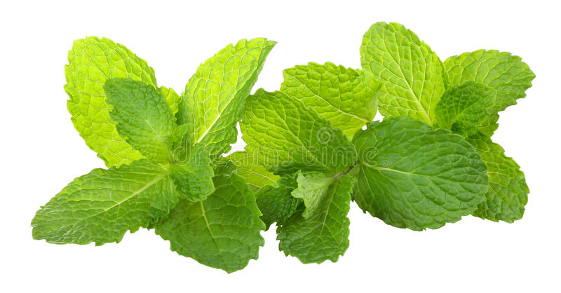 Mint. Fresh mint on white background