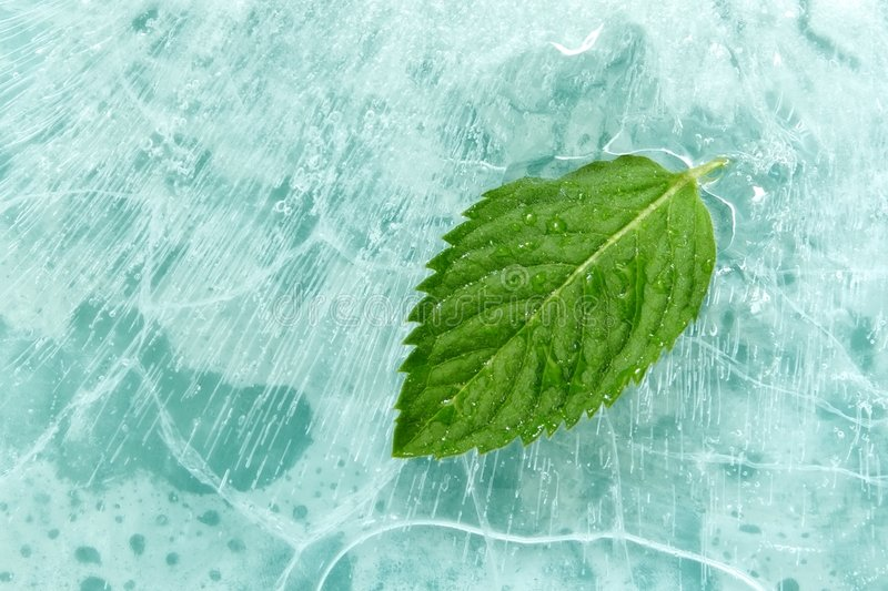 Download Mint stock image. Image of bubble, peppermint, lunch, leaf - 2863039