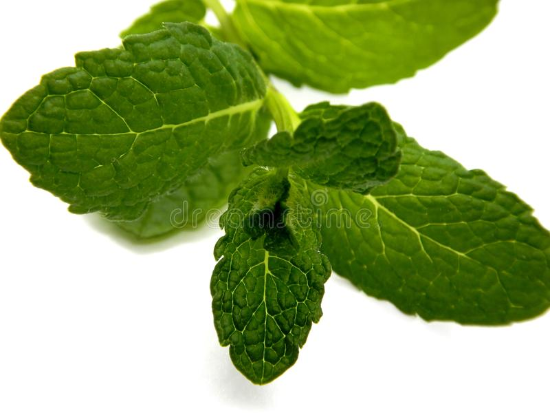 Mint against a white background stock photography