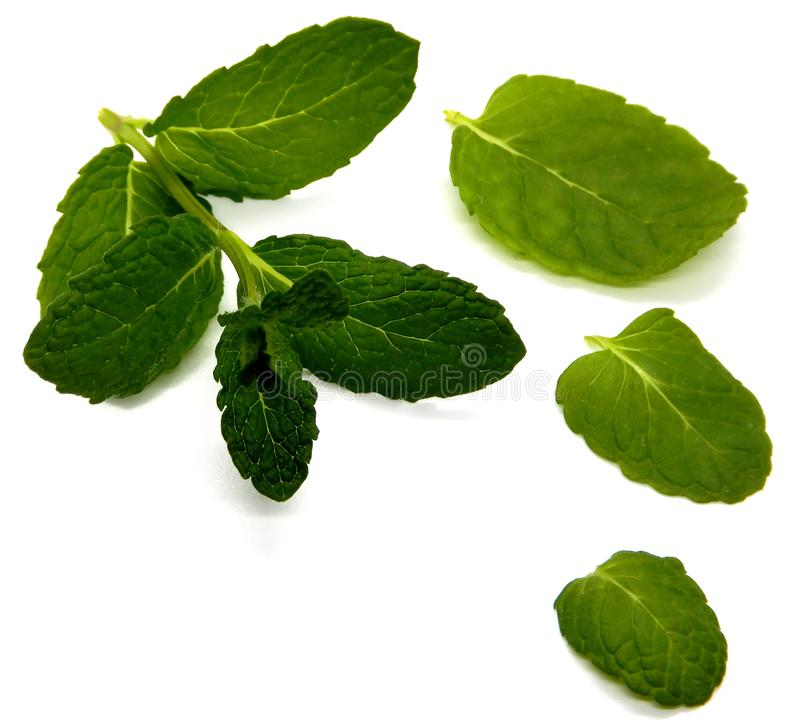 Mint against a white background royalty free stock photos