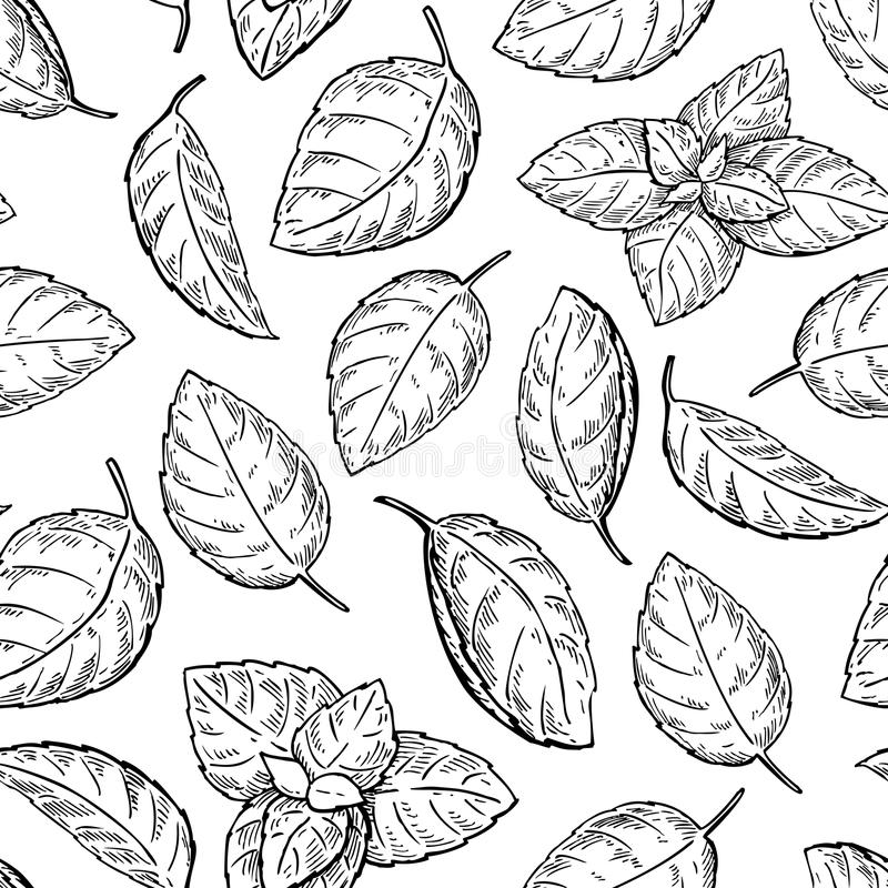 Mint drawing seamless pattern. Isolated mint plant royalty free illustration