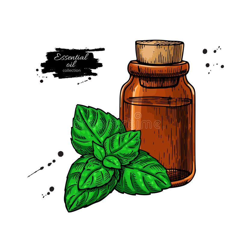 Mint essential oil bottle and peppermint leaves hand drawn vecto royalty free illustration