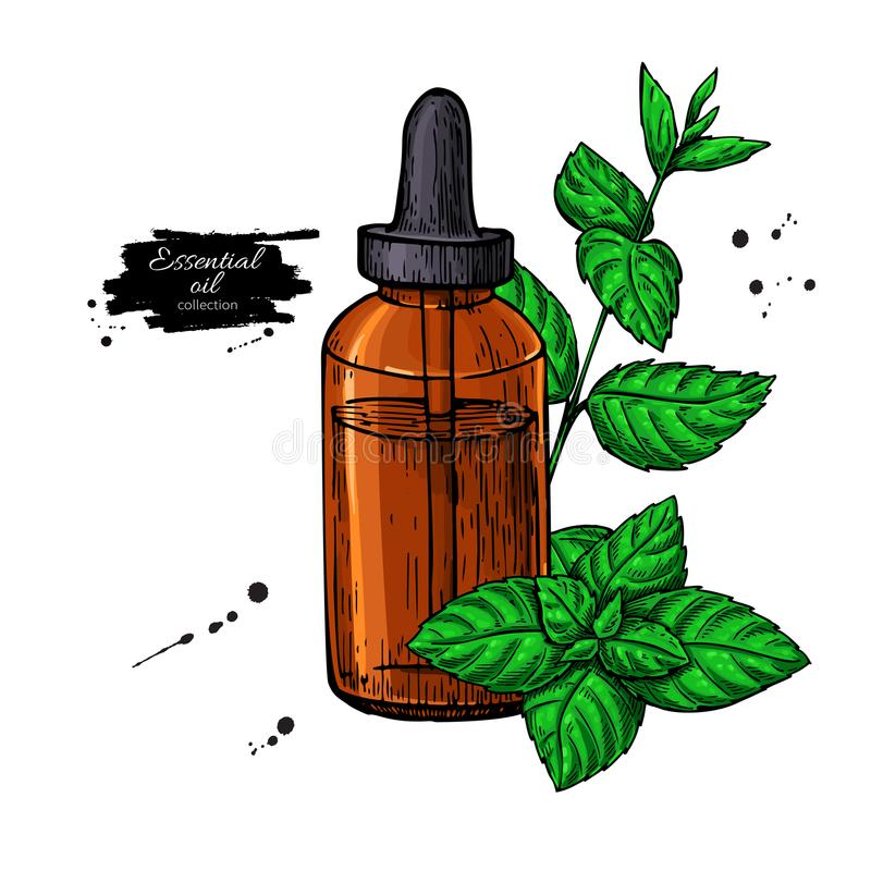 Mint essential oil bottle and peppermint leaves hand drawn vecto stock illustration