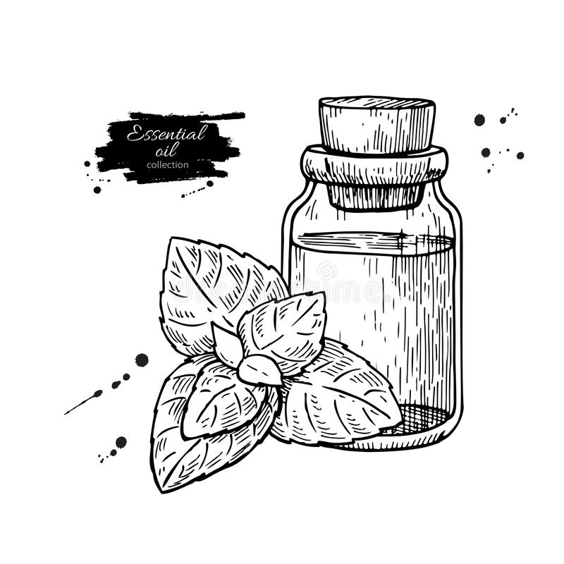 Mint essential oil bottle and peppermint leaves hand drawn vector illustration. Isolated plant drawing for Aromatherapy vector illustration