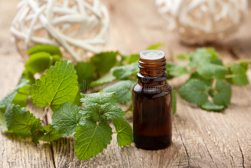 Mint essential oil stock photos
