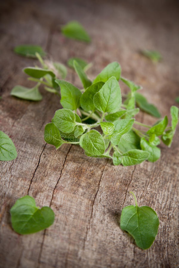 Mint herb. Fresh green mint on wooden table royalty free stock photos