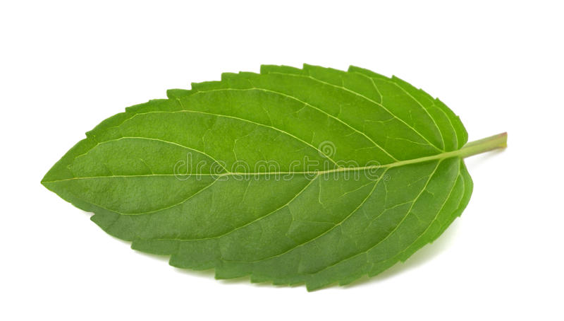 Mint leaf stock images