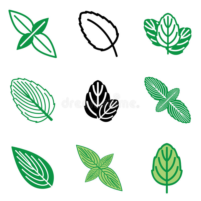 Download Mint leaf icons stock vector. Image of linear, aromatherapy - 24108358