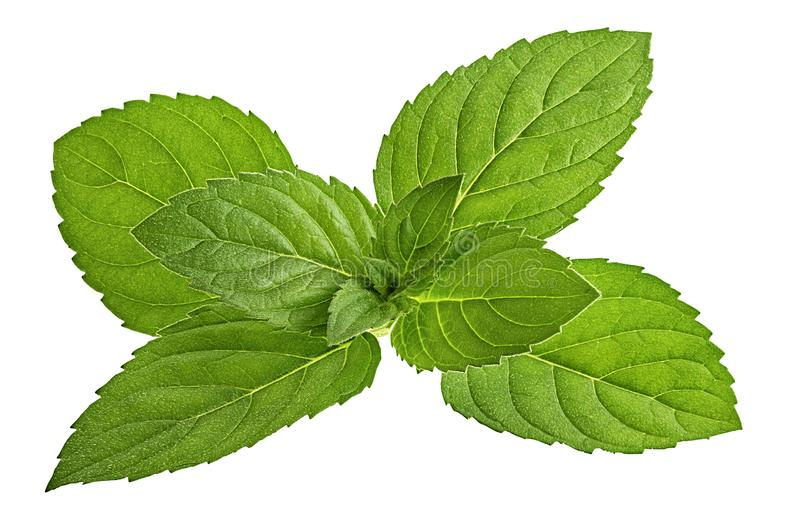 Mint leaf isolated on white royalty free stock photography