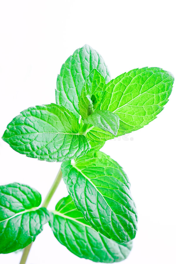 Mint leafs royalty free stock image