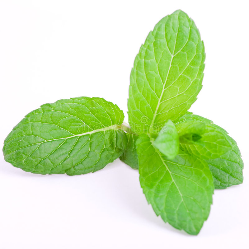 Mint leafs royalty free stock photo