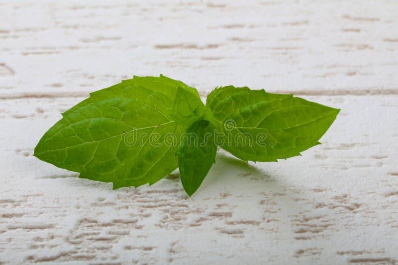 Mint leaves arkivfoto