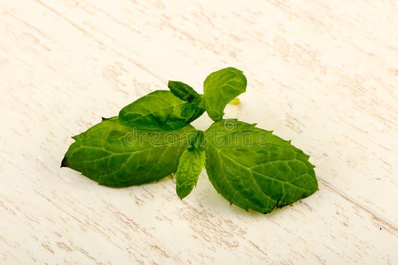 Mint leaves royaltyfri foto