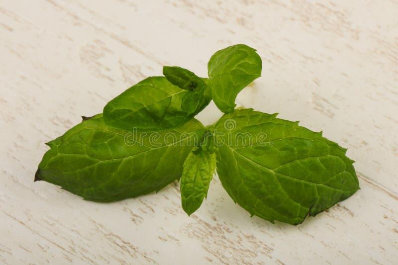 Mint leaves arkivbild