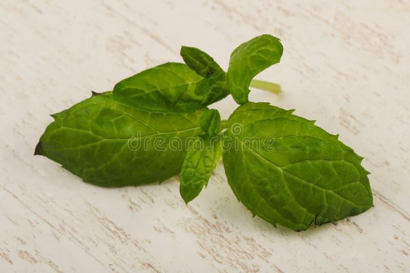 Mint leaves royaltyfria bilder