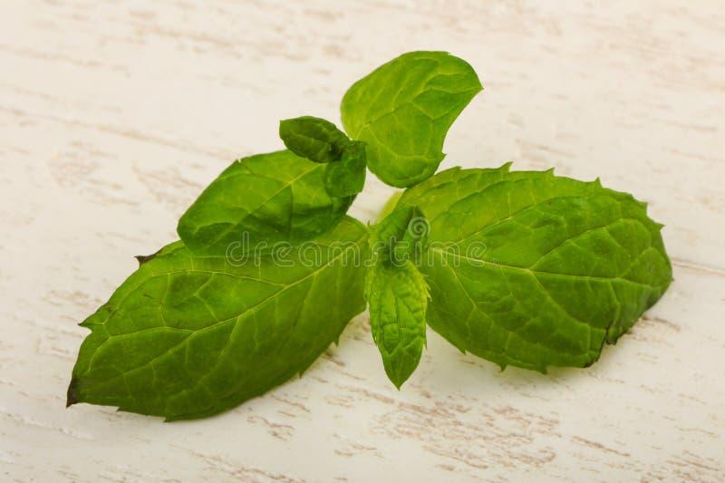 Mint leaves arkivfoton