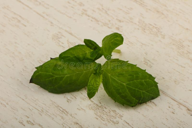 Mint leaves. Fresh green Mint leaves over the wooden background royalty free stock image