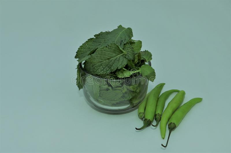 Mint Leaves and Green Chillies royalty free stock photography