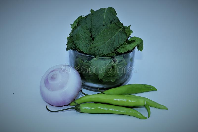Mint Leaves and Green Chillies stock image