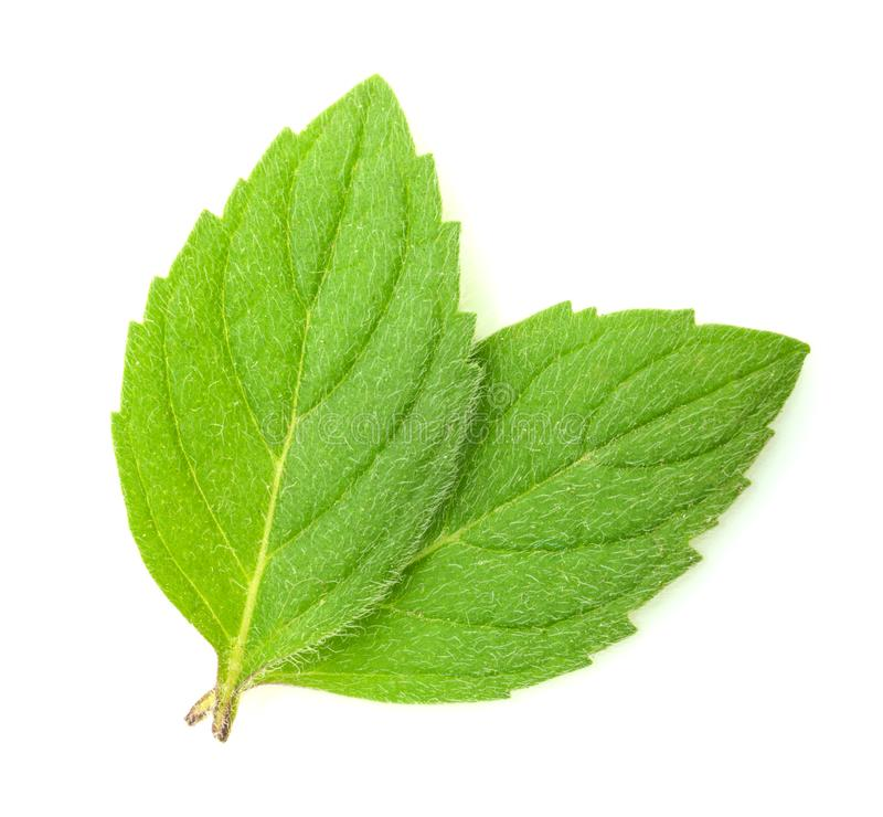 Mint leaves isolated. White background stock photography