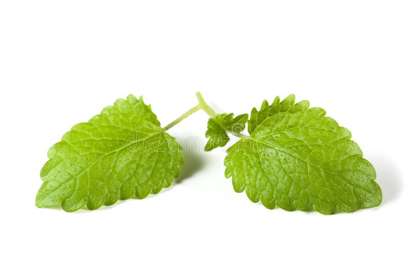 Mint leaves isolated 2 stock photos