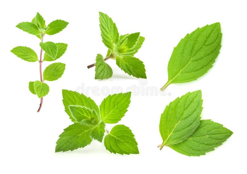 Mint leaves isolated. set royalty free stock image