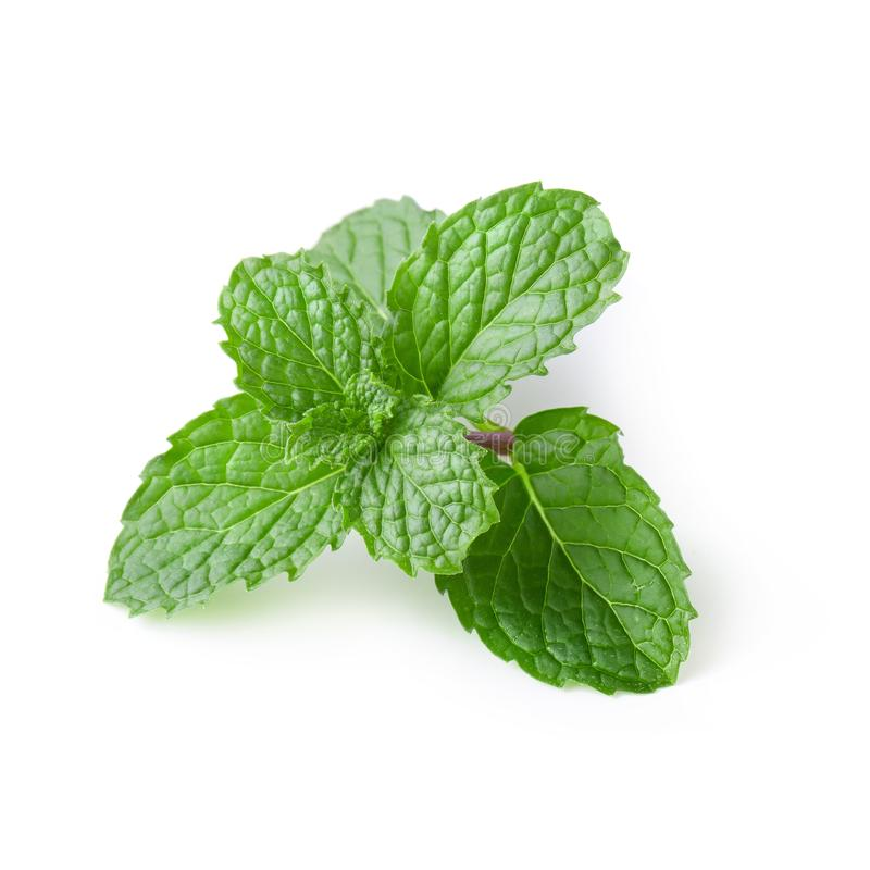 Mint leaves isolated over a white background royalty free stock images