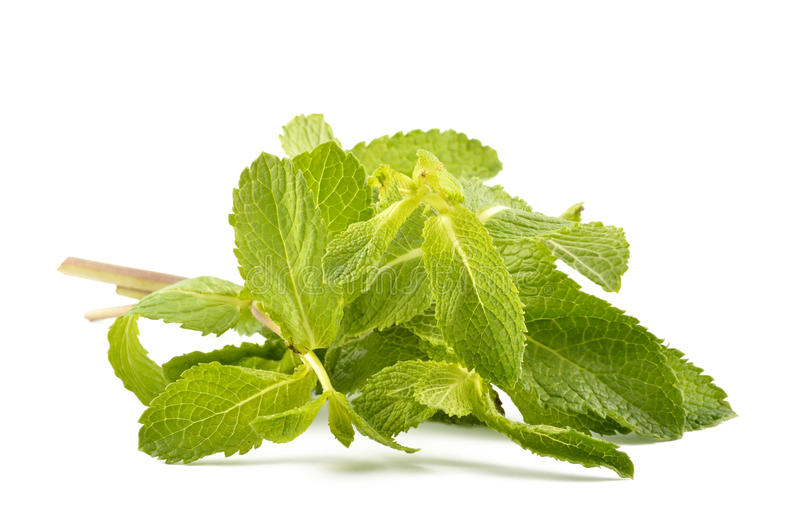Mint leaves on a white background stock images