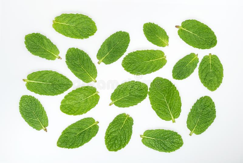 Mint leaves on a white top view.  stock photos