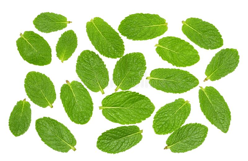 Mint leaves on a white top view.  stock image