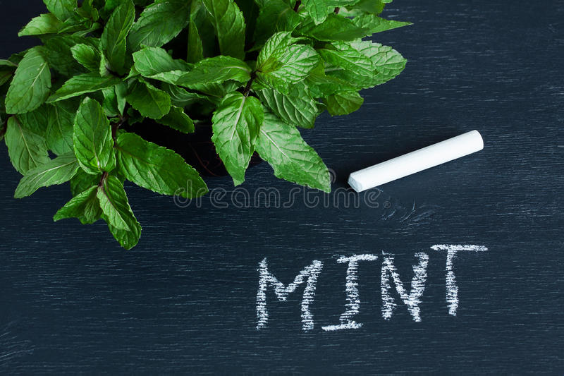 Mint leaves and the word. 'mint' on the chalkboard and piece of chalk on dark background royalty free stock image