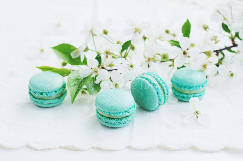 Mint macaroons and blooming cherry flowers at vintage lace doily royalty free stock photo