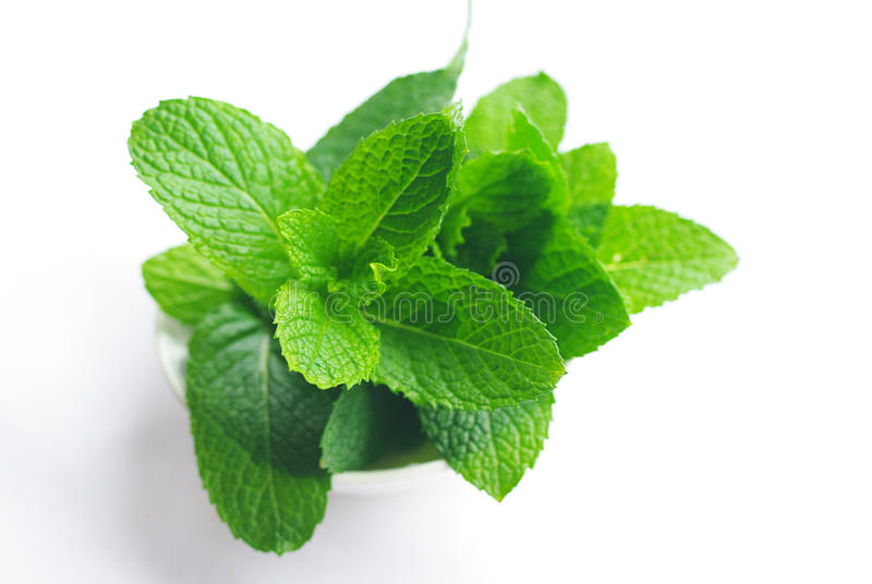 Mint plant stock image