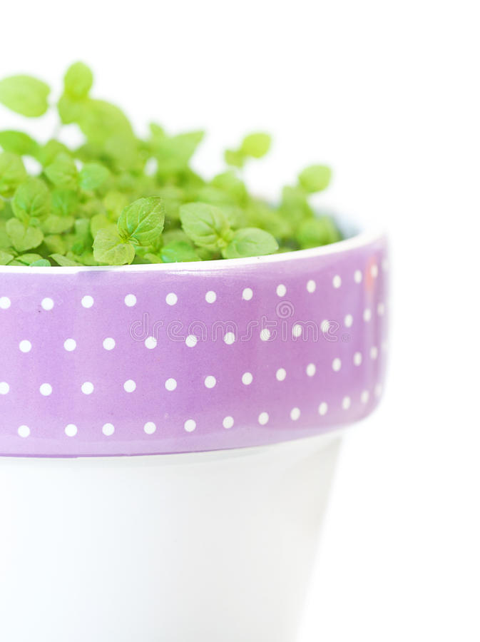 Download Mint in a pot stock image. Image of fresh, melissa, cooking - 25424659