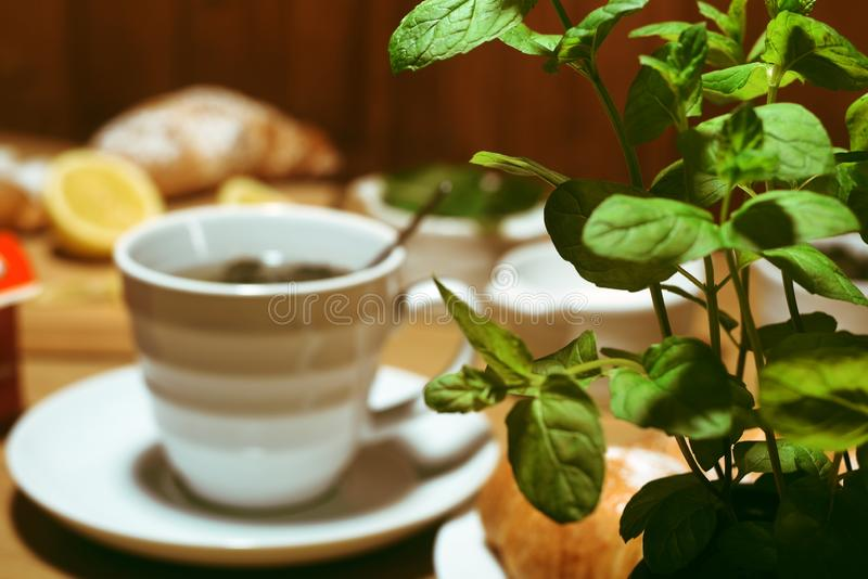 Mint in a pot on the background of a cup of tea. Croissants and lemons on the background. Green tea, homemade tea taste. stock photo