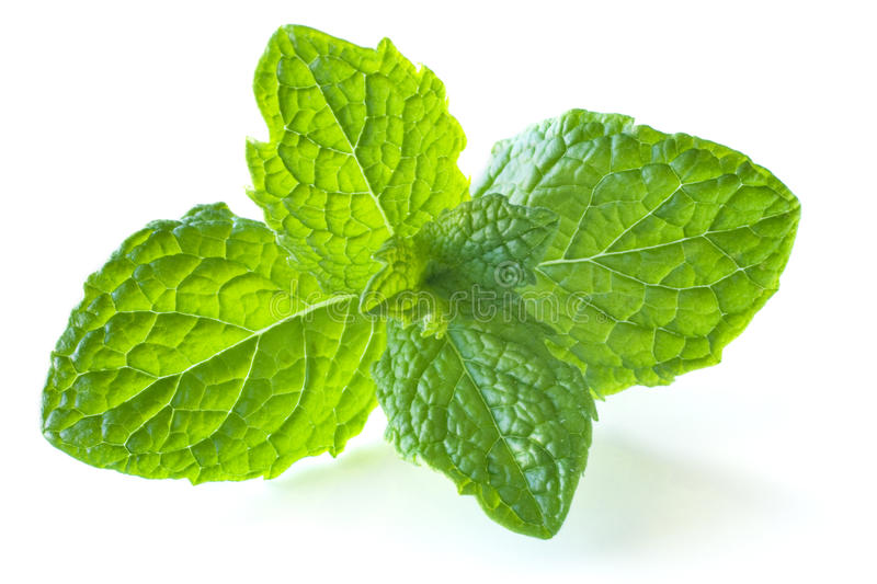Mint Sprig. Sprig of mint, isolated on white, with soft natural shadow royalty free stock photo