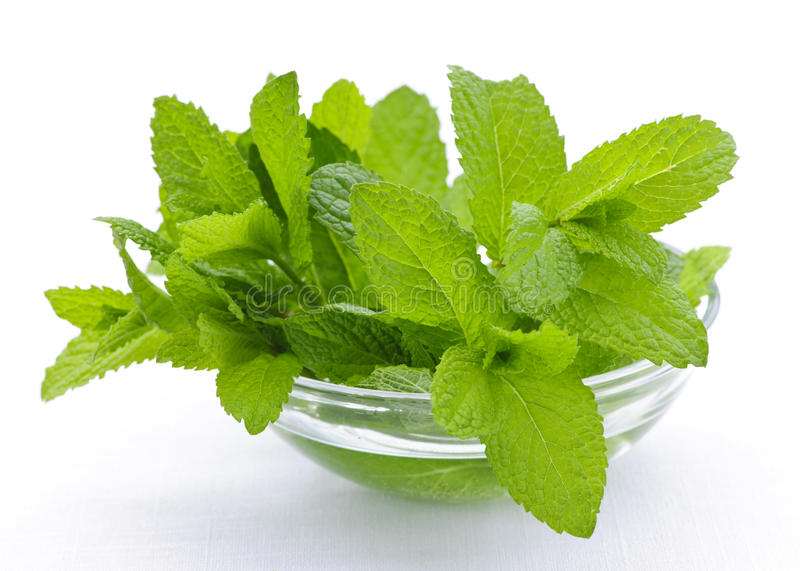 Download Mint sprigs in bowl stock image. Image of cook, glass - 14764961