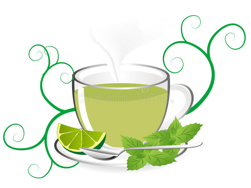 Download Mint tea stock vector. Illustration of vector, design - 31467653