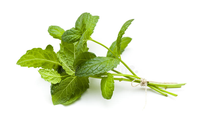 Mint twig royalty free stock photography