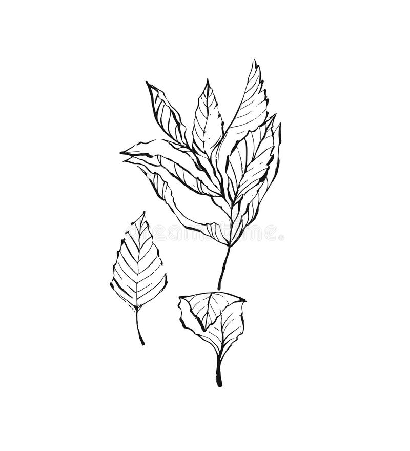 Mint vector drawing set. Isolated mint plant and leaves. Herbal engraved style illustration. Detailed organic product vector illustration