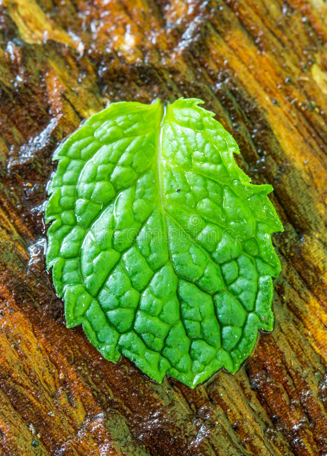 Mint Wet Leaves On The Wooden Stock Image - Image of ...